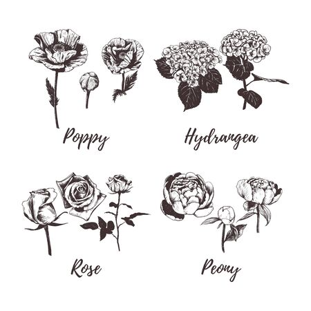 Collection of flowers vector illustration. Set of flowers sketch hand drawing. Poppy, Rose, Peony, Hydrangea