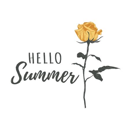 Hello summer calligraphy text vector illustration. Greeting card with a yellow rose. Yellow rose flower. Ilustrace