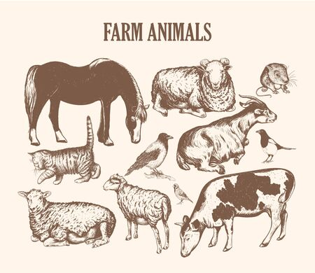 farm animals sketch hand drawing.