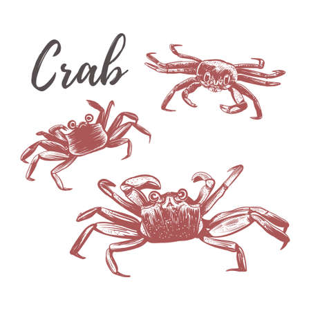 Crab vector illustration. Crab hand drawing Ilustrace