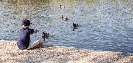 A boy sitting on the edge of a pond feeding the ducks. Banco de Imagens