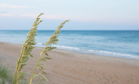 A close up bokeh photo of sea oats with the ocean in the background at sunset.