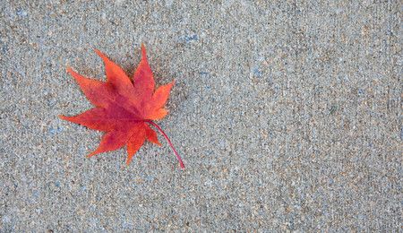 One single red japanese maple leaf on the sidewalk in the fall.