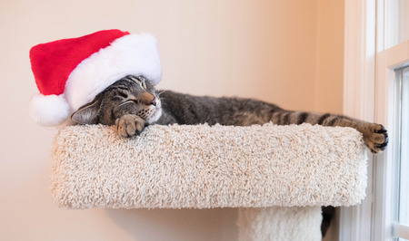A sweet photo of a cat napping with a Santa hat.