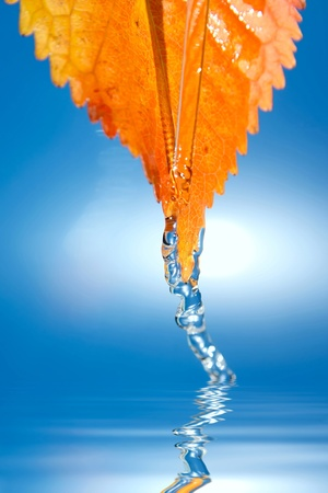 Fresh clear water dropped from autumn leaf. Stock Photo - 12026762