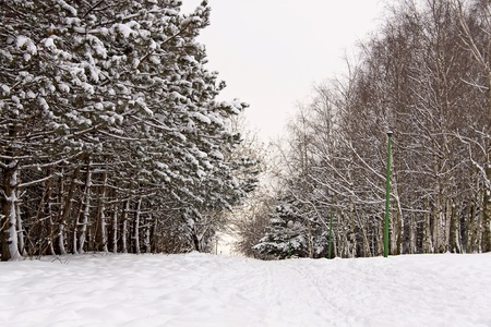 Winter trees covered snow in mountain. Poland.  photo