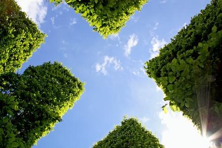 Abstracte weergave van hedge tegen de blauwe hemel.