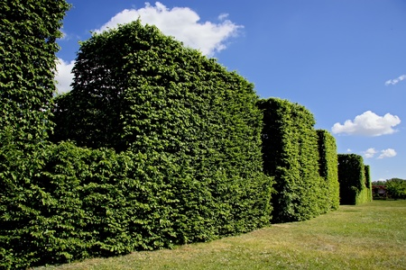 Abstract view of hedge against blue sky.  Stock Photo