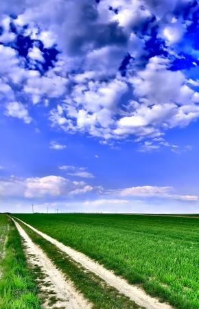 Spring rural landscape  photo