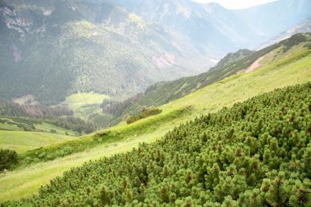 Polish landscapes  Mountain - Tatras  National park - ecological reserve  photo