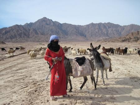 Landschap van de Sinaï-schiereiland