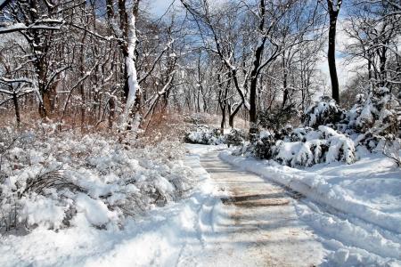 lazienki: Winter trees covered snow  Park Lazienki in Warsaw  Stock Photo