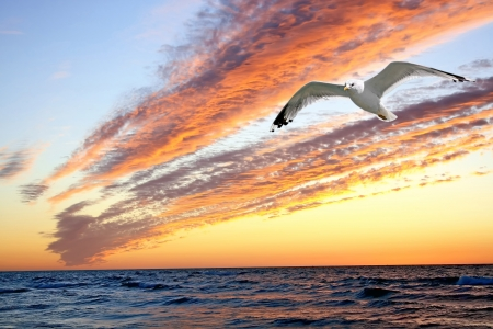 Sunset with shape of seagull