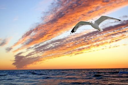 Zonsondergang met de vorm van zeemeeuw Stockfoto