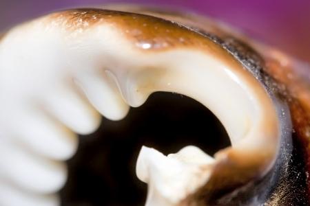 Abstract nature  Closeup of shell   Stock Photo - 16525010