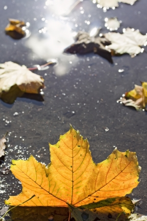 Autumn puddles  Stock Photo - 15034599