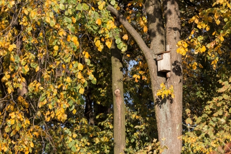 Autumn scenery  Nest boxes on the trees  photo