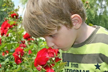 Little boy less four in rose garden  Stock Photo - 16639534