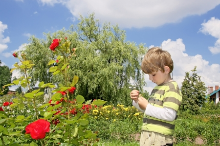 Boy in rose garden   Stock Photo - 19562082