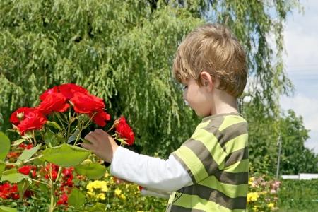 Little boy less four in rose garden   photo