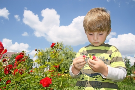 Little boy less four in rose garden Stock Photo - 16639533