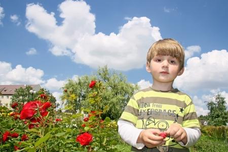 Little boy less four in rose garden Stock Photo - 16639547