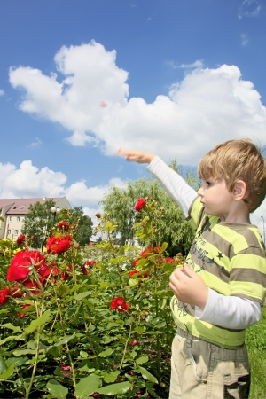 Little boy less four in rose garden   Stock Photo - 16639532