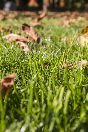 Autumn background, Fallen leaves on the grass  photo