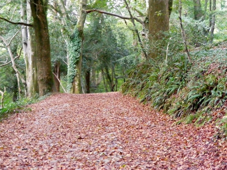 the national trust: National Trust - Lanhydrock  Autumn park in Lanhydrock  Cornwall in Great Britain