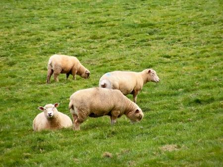lanhydrock: Autumn meadow in Restormel  Sheep farm  Stock Photo