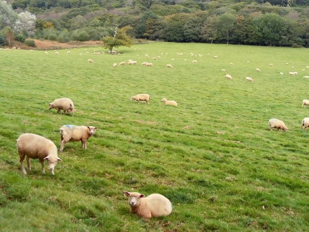 Autumn meadow in Restormel  Sheep farm  Stock Photo