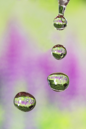 Drops of four seasons - spring  photo