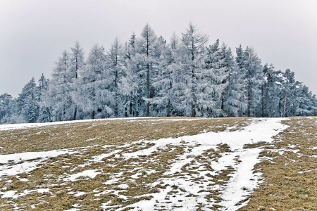 the trees covered with snow: Winter day in Polish mountais. Trees covered snow.