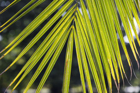 Leaf of tropical palm - symbol of peace.