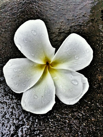 rough: A beautiful flower after rainny day