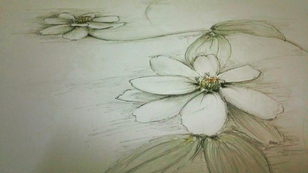 white: Drawing flower with pencil