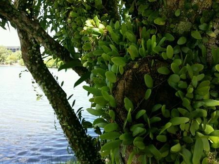 colour: Fern grow on a tree