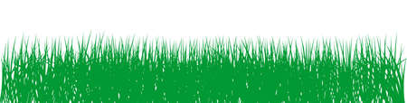Green grass vector on isolated white background. For Background, Easter greetings, calendar, wallpaper etc.