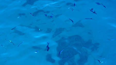 Fish in blue clear shallow water. Top view