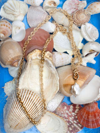 Golden chain with white baroque pearl pendant on marine shell background. Close-up shot Reklamní fotografie