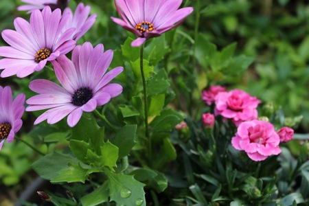 purple and pink flowers in the foreground and background