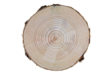 cross section: Growth Rings of a tree