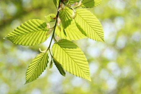 Grünes Laub im Frühling Standard-Bild - 14422776