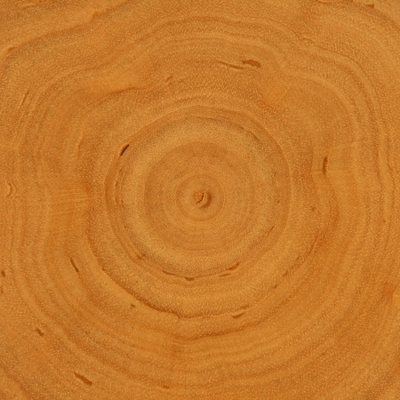 Growth Rings - Wooden Background photo