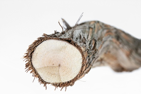 knobby: Cut Brunch With Bark Stock Photo