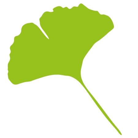 ginkgo leaf: Ginkgo Biloba