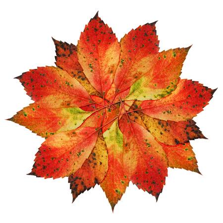 chlorophyll: Autumn-Leaves-Blossom