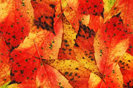 Herbst-Farben-Blätter Standard-Bild - 33127065