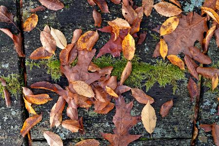 Herbst-Laub-Stillleben Standard-Bild - 48650847