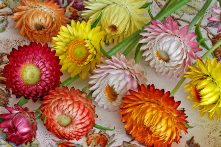 Colourful Strawflowers Arrangement Stock Photo